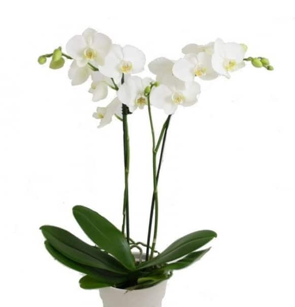 Orchidées et plantes